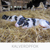 Dog Comets moonstone Leckerball quadrat