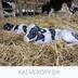 Dog Comets moonstone traktatiebal vierkant